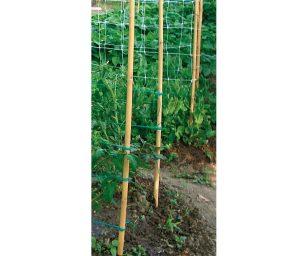 Canna di bamboo da utilizzare come tutore per le piante.