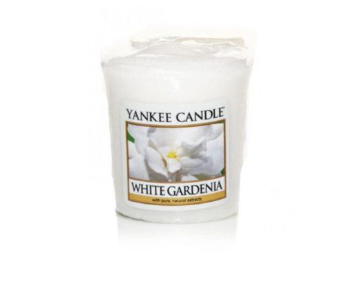 Così accattivante… la stupenda e regale bellezza delle bianche gardenie lussureggianti in piena fioritura.