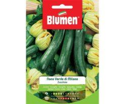 Zucchino nano verde di milano.
