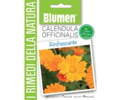Calendula Officinalis.
