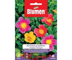 Portulaca Grandiflora semplice in miscuglio.