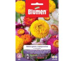 Helicrysum o semprevivo in miscuglio.