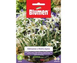Edelweiss o stella alpina.