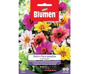 Dalia a fiore semplice in miscuglio.
