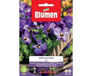 Viola cornuta blu.