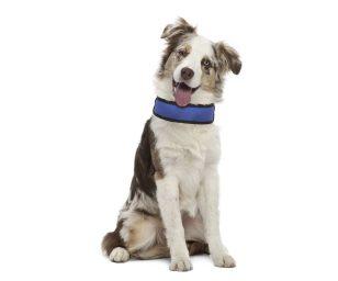 Collare refrigerante per cani.