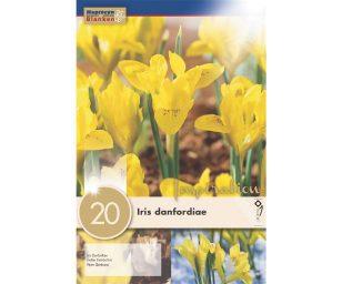 Iris iris danfordiae.