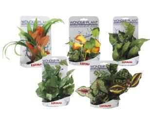 Wonder plant series e 15 -25 cm.