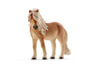 Cavalla pony stute.