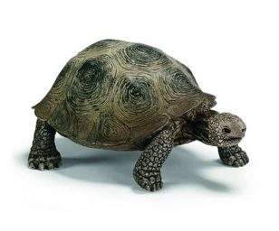 Tartaruga gigante.