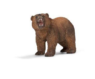 Maschio di orso grizzly.