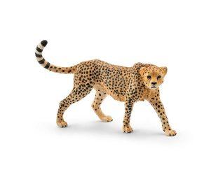 Femmina di ghepardo.