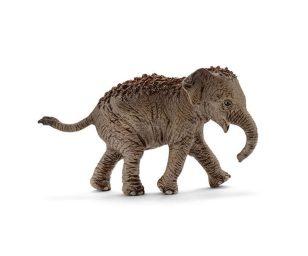 Cucciolo di elefante asiatico.