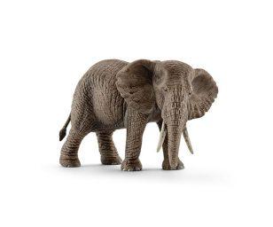 Femmina di elefante africano.