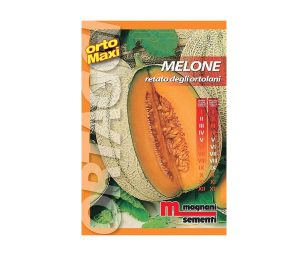 Melone retato è il frutto di grosse dimensioni (2 kg)