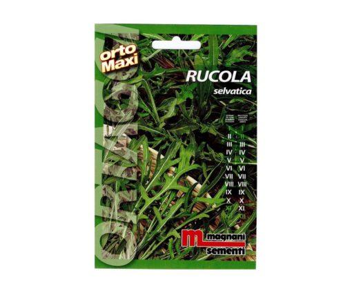 Rucola selvatica è una pianta perenne dalle foglie fortemente lobate e dentellate