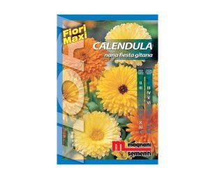Calendula è una pianta molto rustica che si propaga spontaneamente con facilità.
