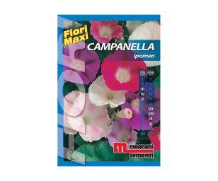 Campanella è una pianta a comportamento rampicante dai caratteristici fiori a forma di tromba che si chiudono alla sera.