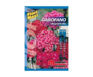 Garofano è una pianta biennale a portamento eretto con infiorescenze compatte che formano un mazzetto