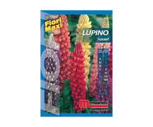 Lupino russel è una pianta perenne a portamento eretto dai grandi fiori a spiga adatti anche ad essere recisi.