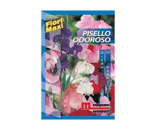 Pisello odoroso è una pianta a portamento rampicante dai caratteristici fiori profumati dai toni che vanno dal lilla al bianco.