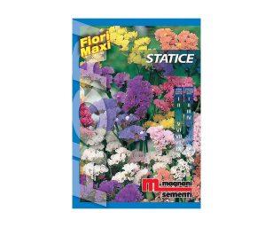 Statice è una pianta rustica di facile coltivazione i cui fiori si prestano per essere essiccati.