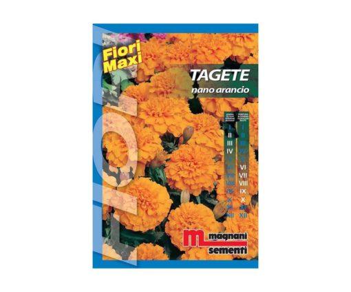 Tagete nano arancio è una pianta di facile coltivazione che si adatta ad ogni tipo di terreno.