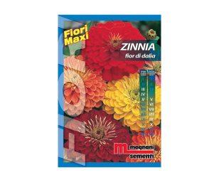 Zinnia fior di dalia è una pianta facilissima da coltivare che si adatta ad ogni tipo di terreno.