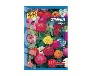 Zinnia lilliput è una pianta annuale dal portamento eretto