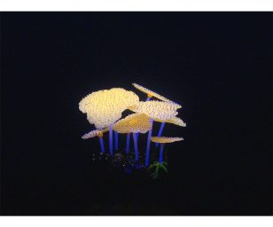 Aqua lumo anemone cm 9