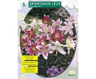 Lilium oriental mix.