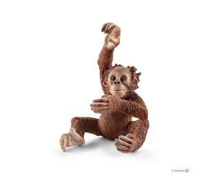 Cucciolo di orangotango.