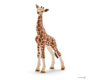 Cucciolo di giraffa.