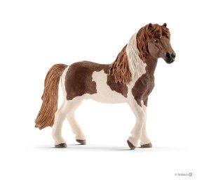 Stallone di pony islandese.