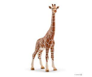 Femmina di giraffa.