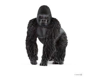 Gorilla maschio.