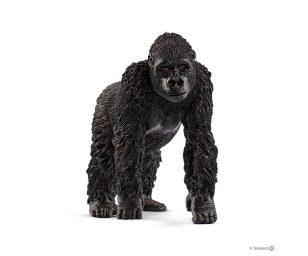 Gorilla femmina.