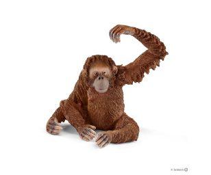 Orangotango femmina.