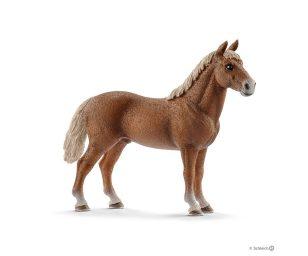 Stallone morgan horse.