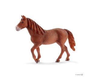 Giumenta morgan horse.
