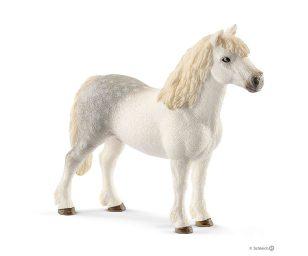 Stallone welsh pony.