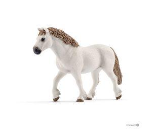 Giumenta welsh pony.