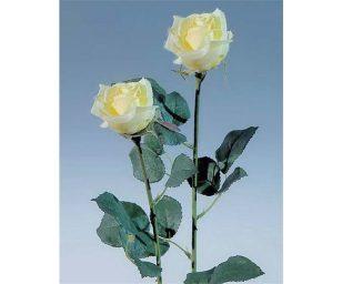 Rosa cm 54.