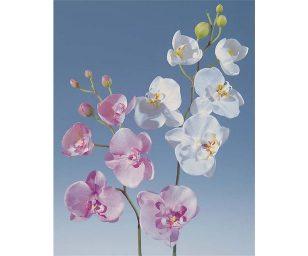 Orchidea phalaenopsis cm 75.