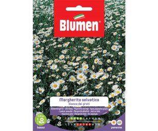 Blumen margherita selvatica bianca prati.