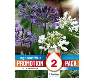 Promo agapanthus white and blue mix 2 pz.