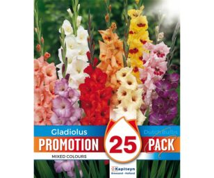 Promo gladiolus mix 25 pz.