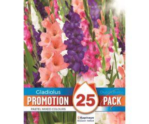Promo gladiolus pastel mix 25 pz.