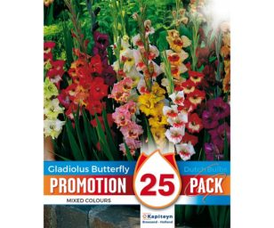 Promo gladiolus butterfly 25 pz.