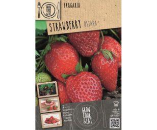 Strawberry ostara 2 pz.